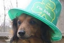 Kiss me, I think I'm Irish / by Sherita Roberts