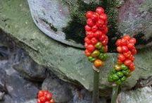 Evil Plants / by Victoria Clements