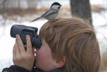 Bird Watch / by Barbara Martire