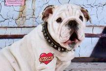 Bulldog Love / English Bulldogs, French Bulldogs.... / by Gracie
