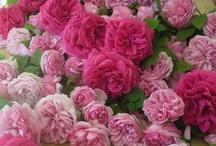 I Love Flowers! / by Pamela Reinitz