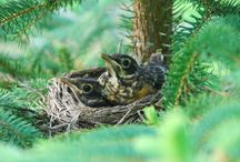 Backyard birds - Photos / by Catherine Wadhams
