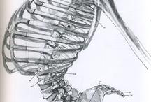 Anatomy / by Eric Marston