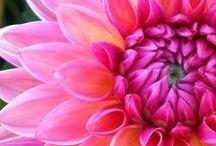 Flowers / by Kim Daly