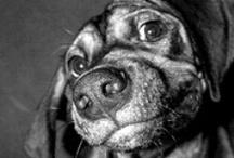 Dogs / by Debra Padgett