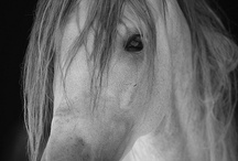 Horses / by Ivy Taylor