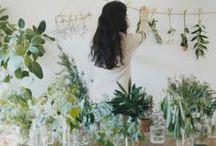 IndoorGardening / by Maria Gabriella Borrelli