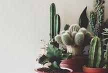 Plants / by Laura Ottomann