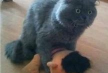Kittehz / I love kittehz.  And Maru is pure love on four legs! / by mªdcªtj0 2.0