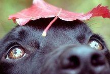 Dogs / by Roxy Lagwagon