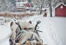 Winter Loveliness / by Allison Abdelnour
