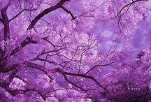 Beautiful Trees / by mªdcªtj0 2.0