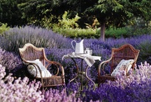 Enchanted Outdoors / My favorite romantic outdoor spaces ... Everything from gardens to living spaces to flower-lined paths, sleeping outdoors, and showering and bathing outdoors. / by Nancy Lorene