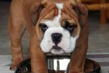 Bulldog / by Silvia