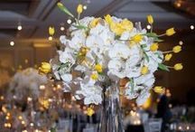 Renaissance Hotel Austin Weddings and Events / by STEMS