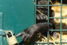 Cruelty Free :D / by Erin Louck