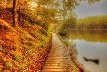 Autumn / by Kris B.