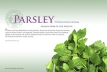Parsley / by Herb Society of America
