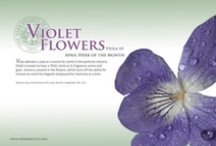 Violets / April Herb of the Month / by Herb Society of America