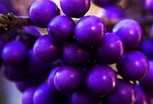 Purple / Beautiful purple / by Pat