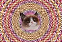 Lovely Animals & Creatures / by Yasushi Uemori