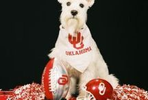 Friends of Boomer and Sooner / by OU Alumni