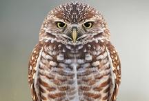Owls / by Tim