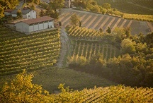 gardens and vineyards / by Ellie Henry