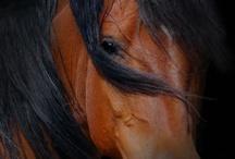 Horses / by Debora Orrick