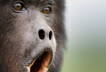 Primates / by Tim