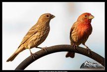 my yard birdies / by Misti D'Angelo