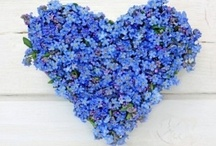 HEARTFUL ~ PLEIN DE COEUR / Love is all you need. / by Daria Pew~a chaque oiseau son nid est beau