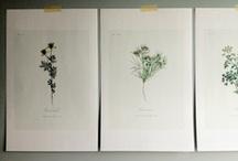 print away / by Kelsey Loewen