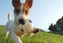 Animals Love Soccer Too! / by US Youth Soccer