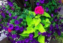 Garden / by Karen Turner