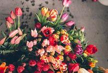 blooms / by Kelli Schoen