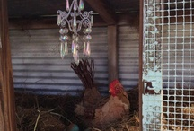 I ♥ CHICKENS... / by Sylvia Fleming