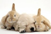 Cute Sleeping Animals / Cute Sleeping Animals - For an exquisite mattress to add to your bedroom, see http://www.plushbeds.com  / by PlushBeds.com
