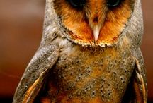 owls / by Conni Kinzler
