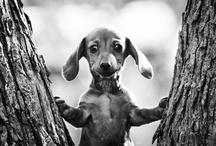 My Pets / by Ginny Murphy