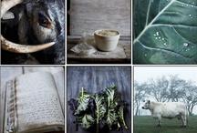 farmtopia / by Mary Quick