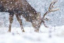 Christmas / by Rikke Majgaard