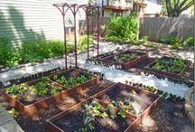 Great Gardening Articles / by Heirloom Organics