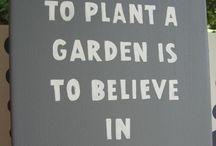 Sanctuary / Backyard Gardening  / by Venus Wooten