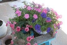... the flowers in Djerba / by How could I live without ...