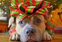 Holidays Christmas / by Tharon Stephens