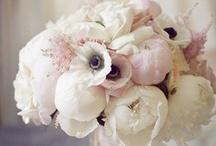 Beauty / by Mykisha Thomas