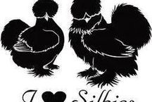 Passionate about Silkies / by Jeanette Haygood
