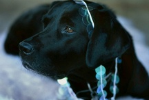 love dogs  / by Lisa Varo, SLP