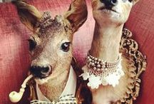 Taxidermy / by Hunting TrophyExperts